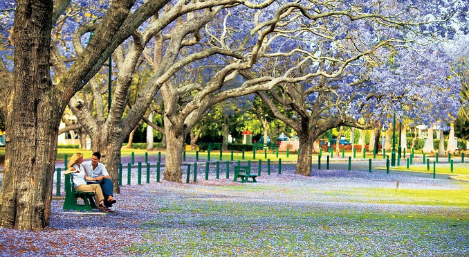 The beautiful new farm park in the autumn, jacaranda trees