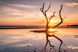 the skeleton tree nudgee beach